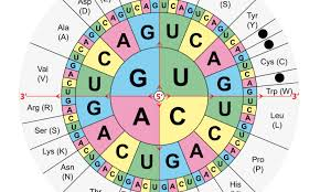 Proving The Genetic Codes Flexibility