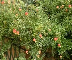 Un piccolo giardino in città: dal mio giardino i frutti dellautunno