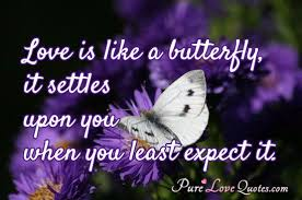Quote On Love Classy Love Is Like A Butterfly It Settles Upon You When You Least Expect