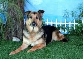 garden grove hospital dog in a cart veterinary hospital in garden grove garden grove emergency