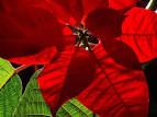 stundenhotel munchen sexhoroskop skorpion