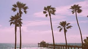 palm trees tumblr. Palm Trees And Ocean Breeze ♡ Tumblr N
