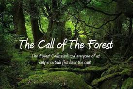Quotes About Trees Forest 40 Quotes Classy Forest Quotes