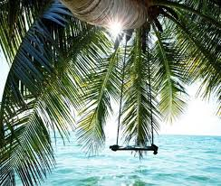 palm trees tumblr vertical. Ocean Paradise Summer Palms Nature Sun Tumblr Photos For Palm Trees Vertical E