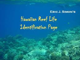 Oahu Fish Chart Hawaii Reef Life Identification Page