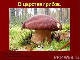 В царстве грибов класс презентация к уроку Окружающий мир В царстве грибов Амалия Безбалинова3 Б класс лицей № 2 г