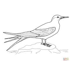 Bluebird Coloring Pages Preschool - Coloring Pages Ideas