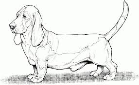 Dog Color Pages Printable Dog Breed Coloring Pages Dog Pic Dog