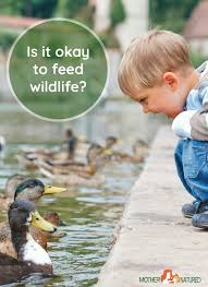 Feeding Wildlife: Is it Okay to Feed Wild Animals? - Mother Natured