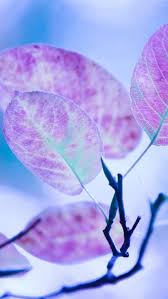 iphone wallpaper hd cute. Perfect Iphone Cute Purple Leaves HD Wallpaper For Iphone With Hd
