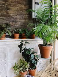 Extremely Low Light Plants Caring For Indoor Plants In Low Light Conditions