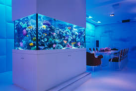 Cool Aquariums For Sale Fish Tank Formidable Fish For Tank Picture Inspirations Small Sale
