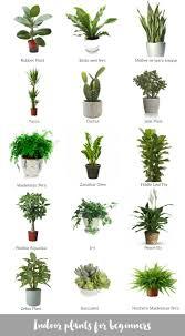 Indoor plants for beginners (Katrina Chambers)