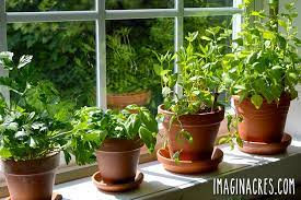 how to grow a windowsill herb garden