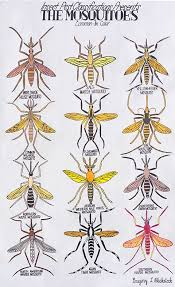 Mosquito Chart 10 Contemporary Outsider Artists Everyone Should Know