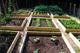 raised vegetable garden beds photo