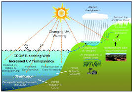ozone layer depletion causes effects and solutions effects of ozone depletion on environment