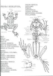 zoology coloring book epic zoology coloring book