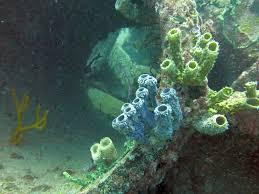 sea emperor size tube sponges on culvert sea emperor jonathan freedman