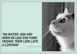 Loss Of A Cat Quotes Interesting 48 Sympathetic Loss Of A Pet Quotes TheSympathyQuotes