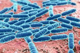 Probiotics Student Internship