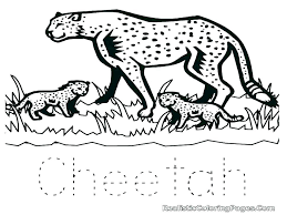 Cheetah Cub Coloring Pages Cheetah Coloring Pages Snow Leopard