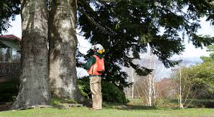 Level 2 Assessment Arbor Care Tree Specialists