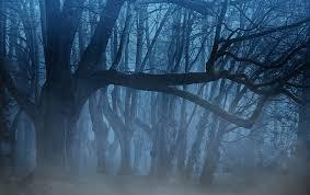 Bildergebnis für nächtlicher Wald