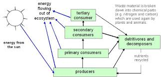 food web pyramid fsc field studies council urban ecosystems