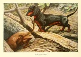 ilration from the 1919 the book of dogs an intimate study of