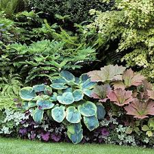 Small Picture The 25 best Border plants ideas on Pinterest Driveway