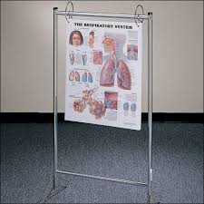 Anatomy Flip Charts Portable Chart Stand Portable Chart Stand An 9880 99 95