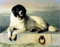 boatswain dog. a painting of landseer by boatswain dog