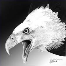 oil paintings of 4 white eagle black and white art for artists black and white