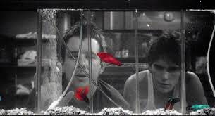 new on blu ray rumble fish cutprintfilm