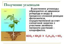 Реферат Углеводы Строение и функции Углеводы Строение и функции