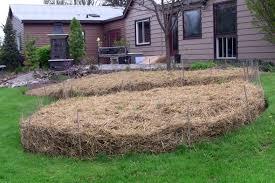 sheet mulch in my organic garden