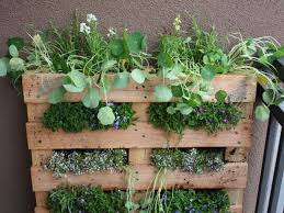 apartment herb garden. Pallet Apartment Herb Garden Balcony