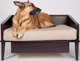 designer dog bed furniture. Jas Pet Bed - Eco-Friendly Recycled Wood With Foam Mattress And Drawer Modern Contemporary Products Updated Daily CoolPetProducts.com Designer Dog Furniture O