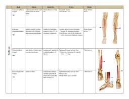 Foot Chart Origin Muscle Chart