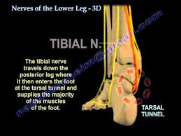 Nerves Of The Lower Leg 3d Everything You Need To Know