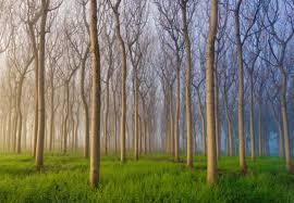 Morning Of The Forest Fotobehang Behang Bestel Nu Op Europostersbe
