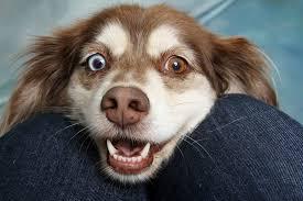 do puppies eyes get darker puppy eye