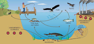 Image result for stream food chain
