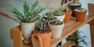 denver garden centers. If You Are New To Plants And Gardening, It Can Be A Challenge Get Denver Garden Centers 0