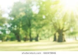 outdoor backgrounds. Blur Park With Sun Light Abstract Background. Outdoor Backgrounds O