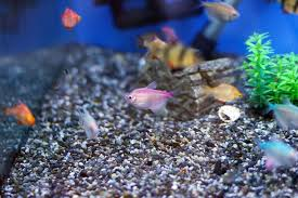 Mardel Fish Disease Chart The Importance Of Using Malachite Green In Aquariums