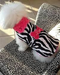 zebra fur coat for dogs