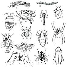 free insect coloring pages colouring insects i for page kids printable inse