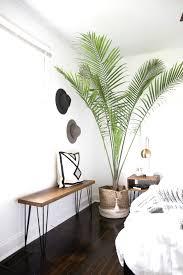 Pflanzen Fürs Schlafzimmer Besser Schlafen Mit Der Pflanze Des
